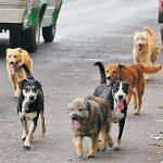 Varela busca generar una red de adopción para sacar los perros de la calle