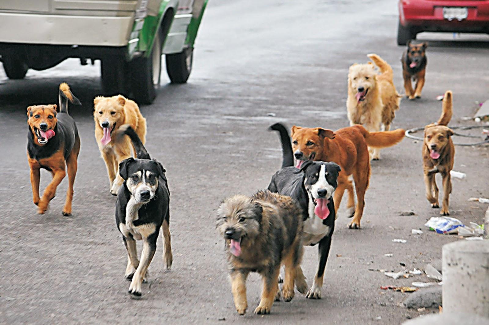 Perros jodidos en video